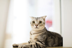 Cute cat looking at camera. On the floor Royalty Free Stock Images