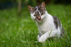Cute cat looking at camera. Natural light. Royalty Free Stock Photography