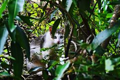 Cute cat looking camera. Standing in tree Stock Photo