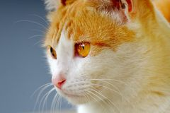 Cute cat looking at front Stock Photo