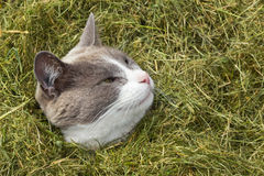 Cute Cat looking out of pile of grass Stock Photos