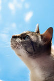 Cute cat looking at the sky Royalty Free Stock Photo