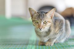 Cute cat looking for something royalty free stock photos
