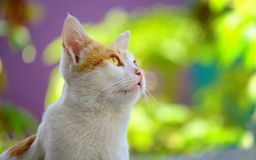 Cute cat looking at top Royalty Free Stock Photo