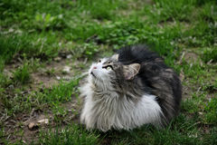 Cute cat looking up Royalty Free Stock Photography