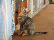 Cute cat looking up Royalty Free Stock Photos