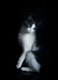 Cute cat looking up sitting isolated on a black background lit f Stock Photo