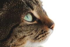 Cute Cat 2. Cute cat looking up towards the sky Stock Photography
