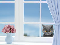 Cute cat looking through the window royalty free stock photography