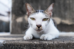 Cute cat looking at you Stock Images