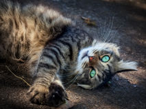 Cute cat luxuriates in the sunlight. Playing with dry leaf Royalty Free Stock Images