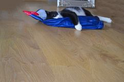 Cute cat lying at home. Cute cat lying with  a blue shopping bag at home Royalty Free Stock Images