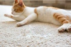 Cute cat lying on carpet near wet. Spot Stock Photos