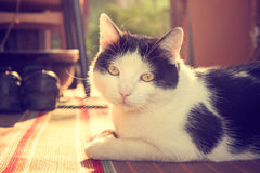 Cute Cat Lying on Carpet at Sunset Royalty Free Stock Photography