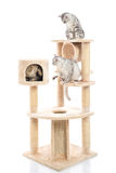 Cute cat lying on cat tower Royalty Free Stock Photography