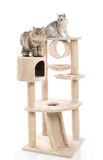 Cute cat lying on cat tower Stock Images