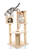 Cute cat lying on cat tower Stock Photo