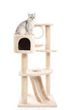 Cute cat lying on cat tower Stock Photos