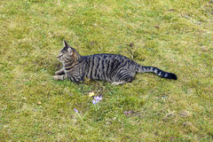 Cute cat lying in the garden Stock Photo