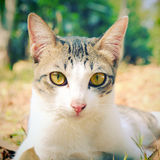 Cute cat lying on grass in the garden with retro effect Stock Images