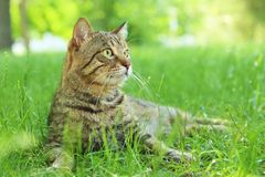 Cute cat lying on green grass royalty free stock photo