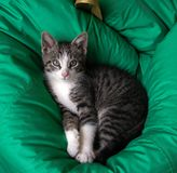 Cute kitty lying on a pillow, just woke up royalty free stock images