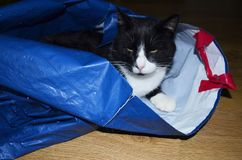 Cute cat lying at home. Cute cat lying with  a blue shopping bag at home Stock Images