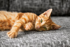Cute cat lying Royalty Free Stock Photography