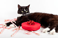 Cute cat lying near decorative gift Royalty Free Stock Images