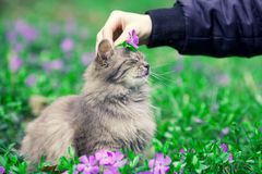 Cat siting on the periwinkle lawn Stock Photo