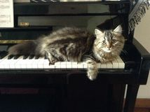 Cute cat. Cat lying on the piano Royalty Free Stock Images