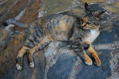 Cute cat lying on stone floor. At Thailand Stock Photography