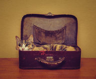 Cute cat lying in a suitcase Royalty Free Stock Photography