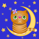 Cute Cat on the moon Stock Image