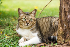 Cute cat on nature background Royalty Free Stock Image
