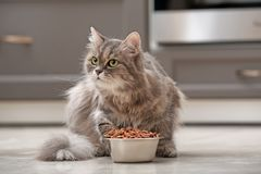 Cute cat near bowl with food at home stock images