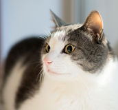 Cute cat near window. Mammal, home pet. Indoor. Cute cat near window. Mammal, home pet Stock Photos