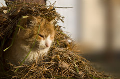 Cute cat in the needles. Outdoors Royalty Free Stock Photos
