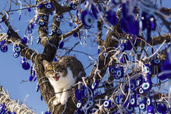 A cute cat opening mouth in evil eye tree cappadocia Royalty Free Stock Image