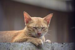 Cute cat orange,The hiding of the orange cat.  Royalty Free Stock Image