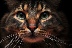 Cute cat out of the shadows royalty free stock photography