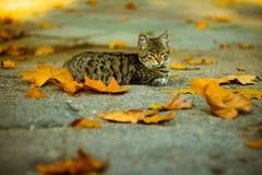Cute cat. Outdoor in nature in autumn Stock Photo