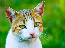Cute cat outdoors Royalty Free Stock Images