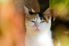 Cute cat outdoors Royalty Free Stock Photography