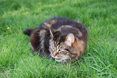 Cute cat outside 2 Stock Photography