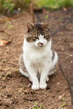 Cute cat outside Stock Images