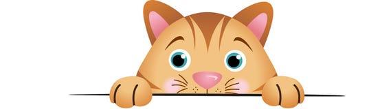 Cute cat peeking Royalty Free Stock Photography