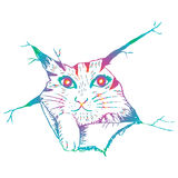 Cute cat peering. Sketchy style illustration. Stock Photo