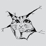 Cute cat peering. Sketchy style illustration. Royalty Free Stock Photo