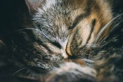 Cute cat pet sleeping. Macro close-up detail of cute cat pet sleeping on a sunny day - focus detail on the sweet face stock photography